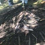 Delimitación cerca del árbol madre con troncos
