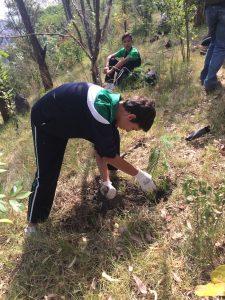 Cada año participamos en reforestaciones